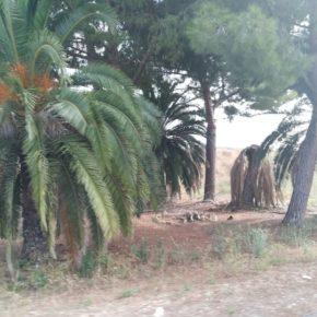 Ciudadanos (Cs) de Alzira denuncia el abandono de parques y plazas de la ciudad